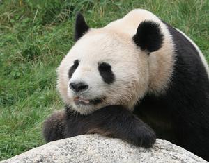 Google Panda Update maakt contentmarketing een noodzakelijkheid
