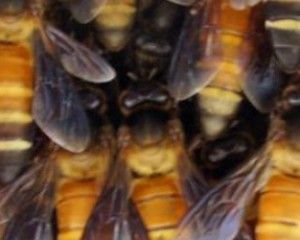 Bijen werken samen