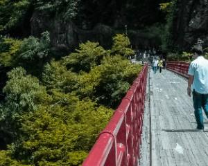 Vier toeristen steken een brug over in een boslandschap