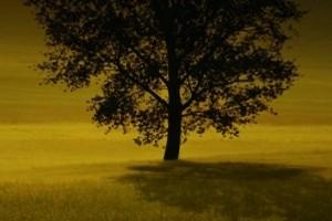 keyword tree klein