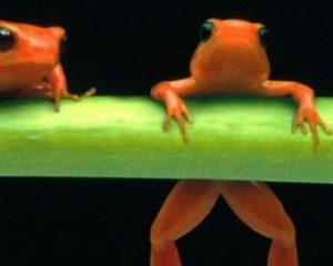 Handleiding Screaming Frog voor content audits