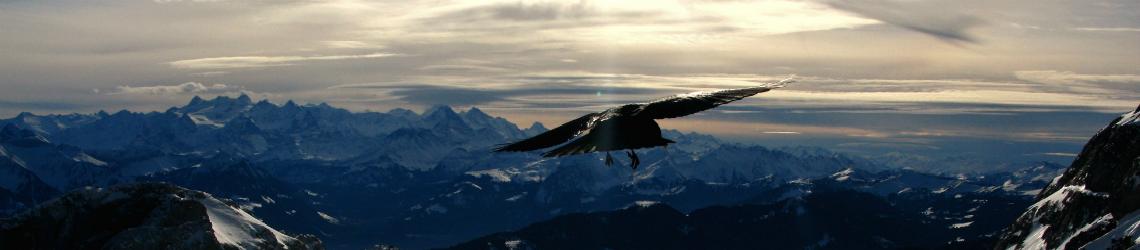 SEO-checklist, vliegende arend